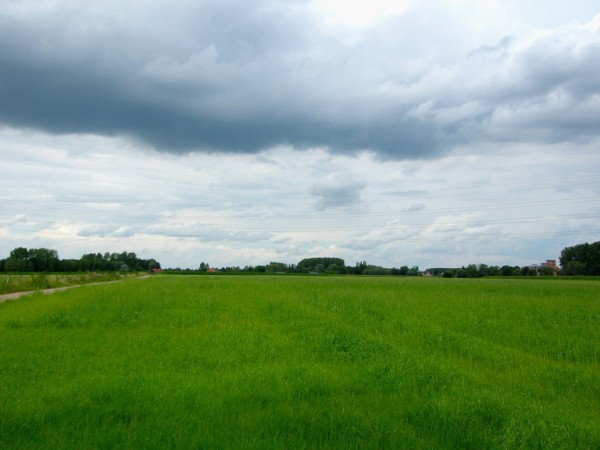 fields_of_green_by_cinitriqs