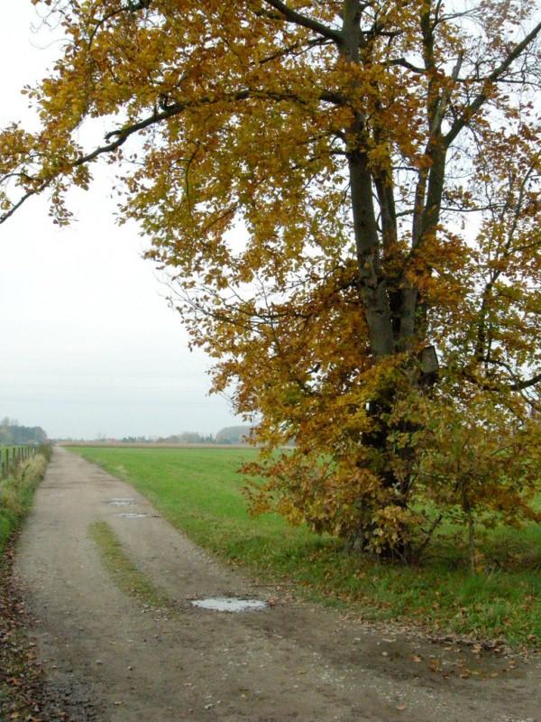 tree_on_corner_of_field___fall_by_cinitriqs