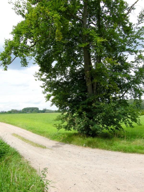 tree_on_corner_of_field___summer_by_cinitriqs