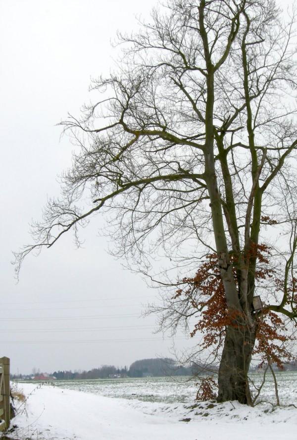 tree_on_corner_of_field___winter_by_cinitriqs